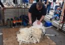 Wool to the Fore at Shipston Wool Fair