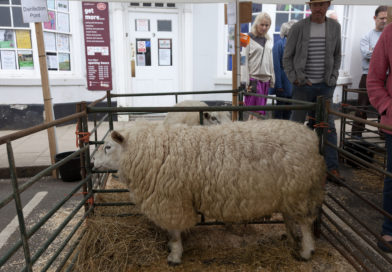Wool to the fore in Shipston for 10th Year