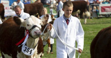 Busy and Exciting 2018 Moreton Show